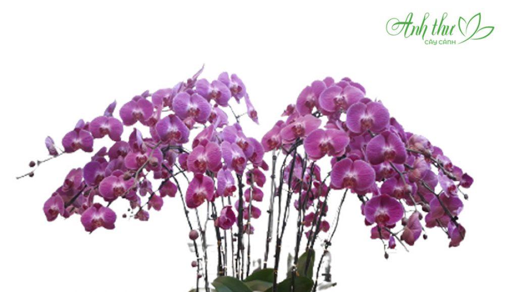 Ý Nghĩa của cây hoa ngày Tết