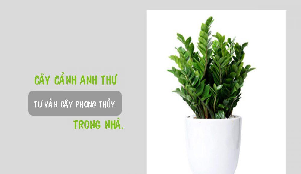 Một số điều bạn chưa biết về cây phong thủy trong nhà
