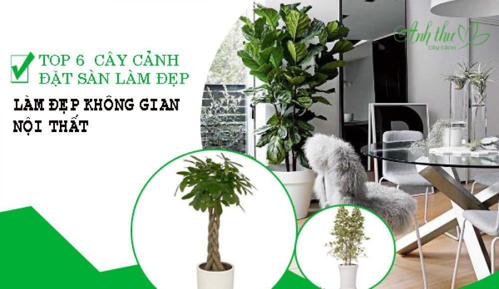 Top 6 loại cây cảnh đặt sàn làm đẹp cho không gian nội thất.